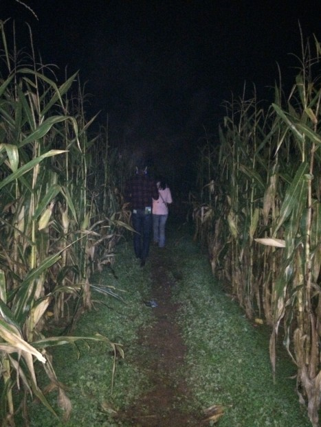 Into the maize!