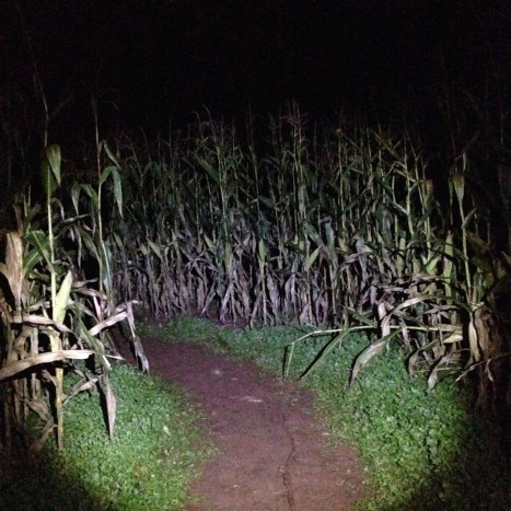 Creepy corn photo courtesy of Fan